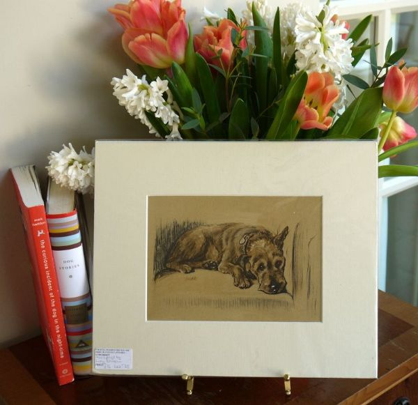 Lakeland terrier - lying down on chair - LakT D3 1940's print by Lucy Dawson
